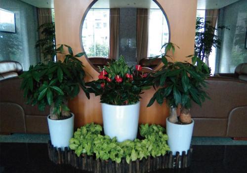 植物租摆套餐(二)