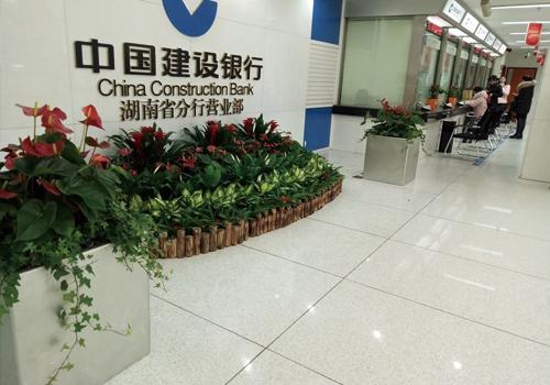 植物租摆套餐(三)