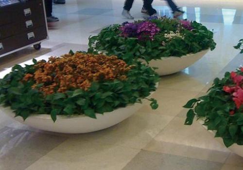 植物租摆套餐(四)