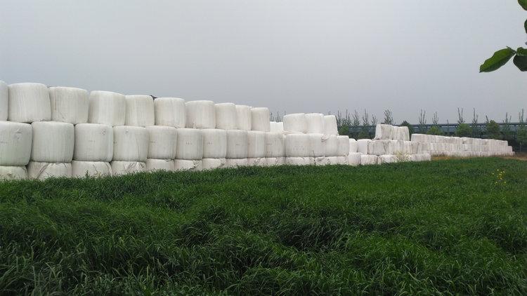 牧草产品图片