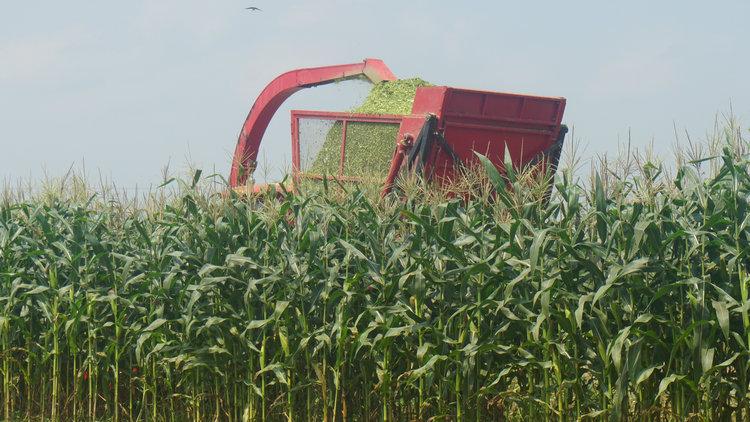 青贮玉米种植基地