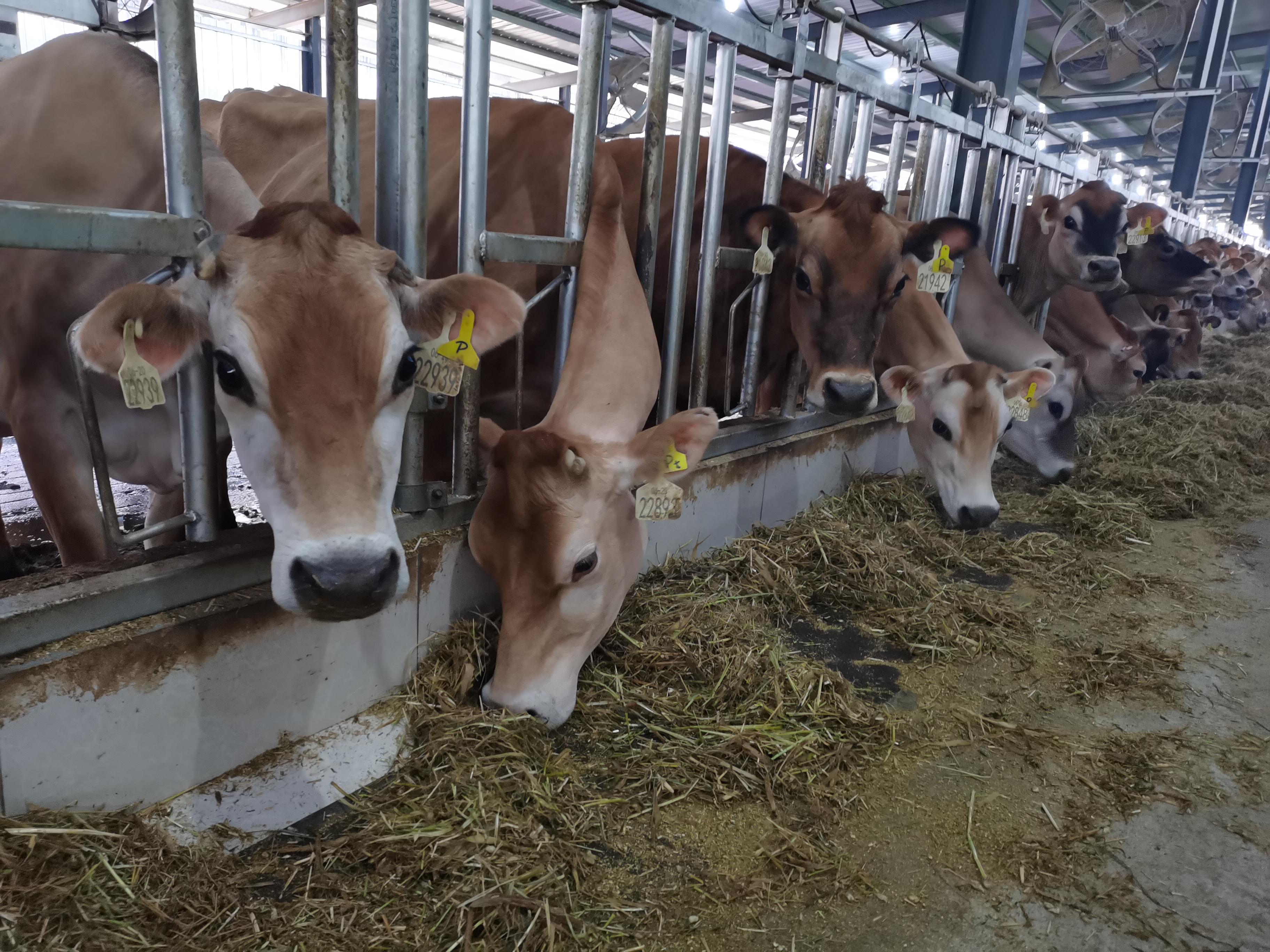 奶牛养殖场