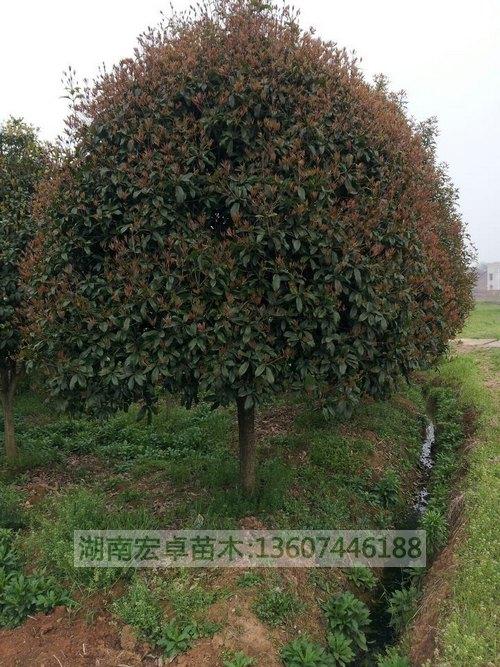 壁纸 成片种植 风景 树 植物 种植基地 桌面 500_667 竖版 竖屏 手机